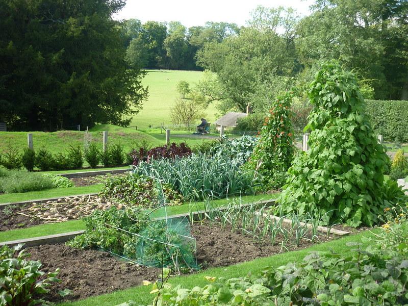 Zelenjavni vrt potrebuje načrt Jerneja Jošar